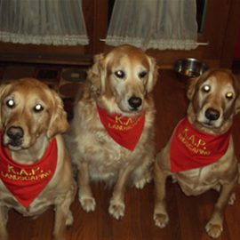 In Loving Memory of Zoe, Cosmo and Bailey